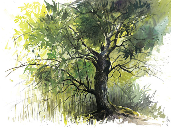 Arbre: un dessin de Laurent Willenegger