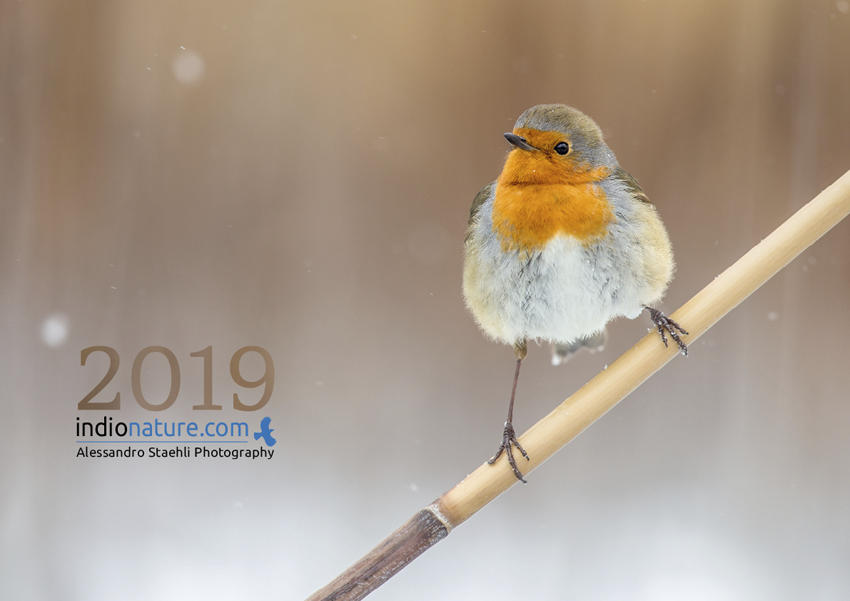 Calendrier photo Indionature 2019
