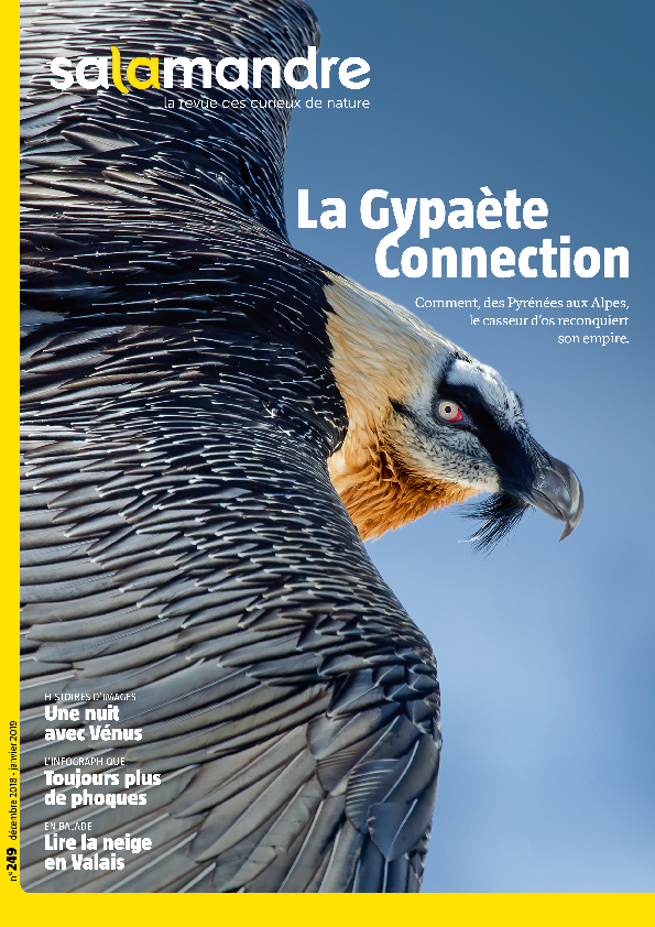 La Gypaète Connection (N°249)