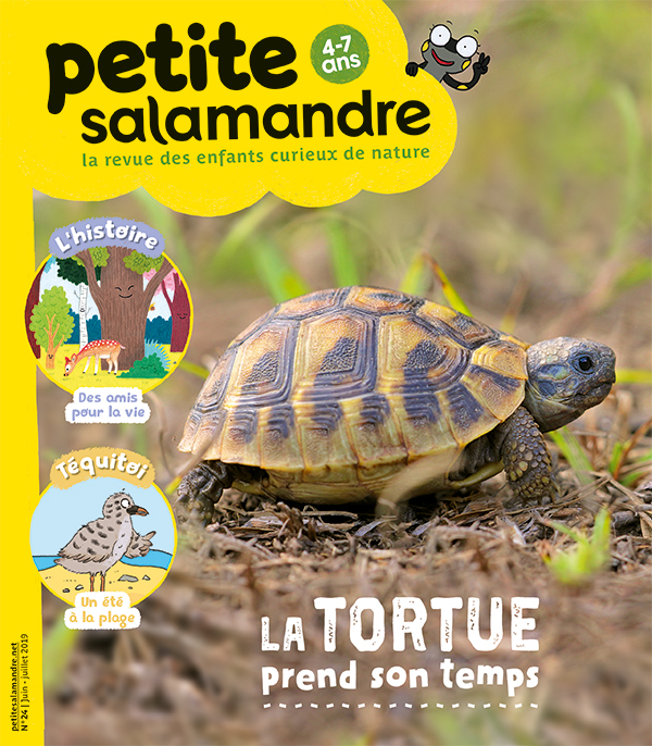 La tortue prend son temps (n° 24)