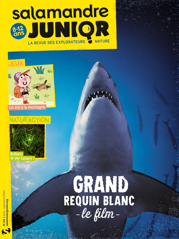 Le grand requin blanc, le film (n°131)