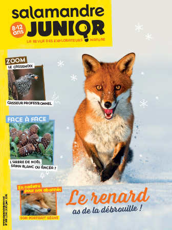 salamandre-junior-103-renard-as-de-la-debrouille