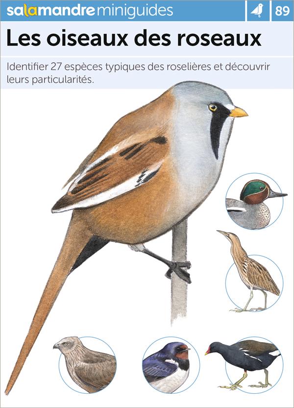 """Résultat de recherche d'images pour """"Les oiseaux des roseaux : identifier 27 espèces typiques des roselières et découvrir leurs particularités"""""""