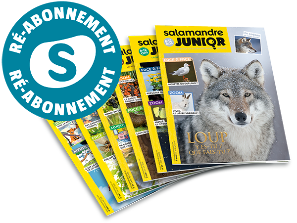 Réabonnements Salamandre Junior