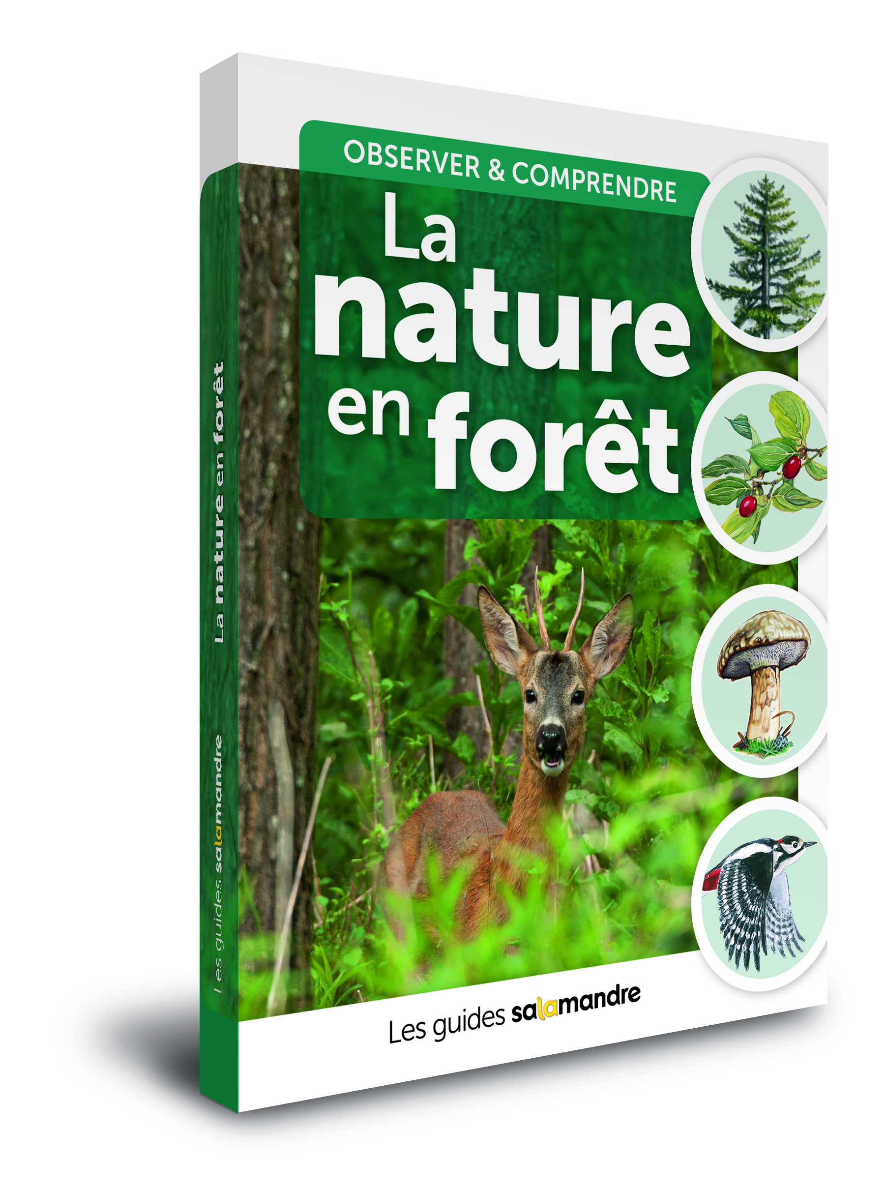 guide nature en forêt