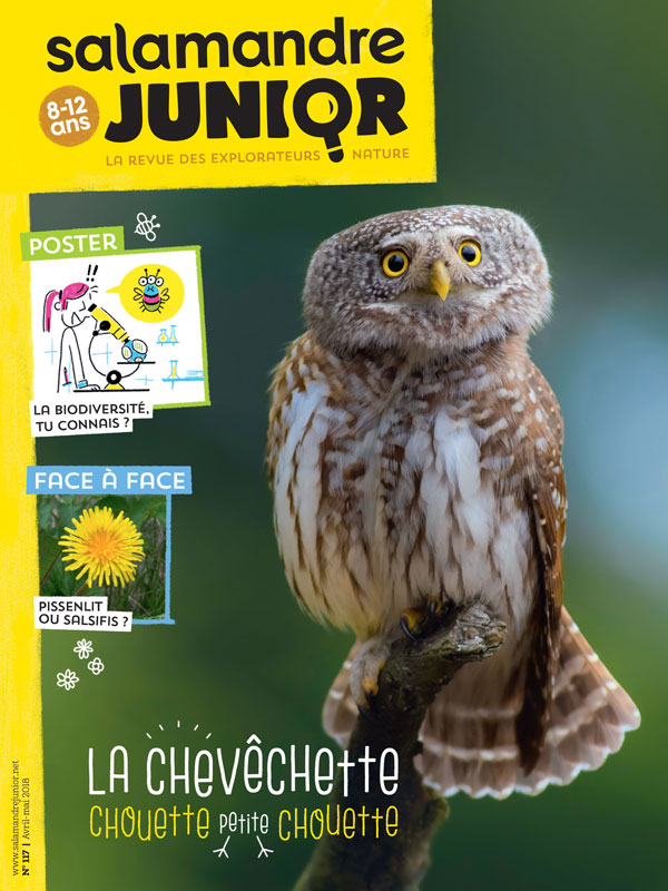salamandre junior 117